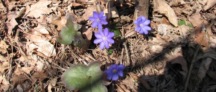 Frühling in Pluski Zloty Strug